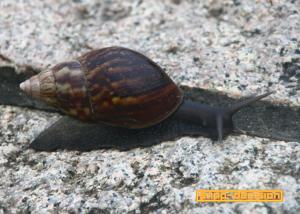 Snail, Taipei